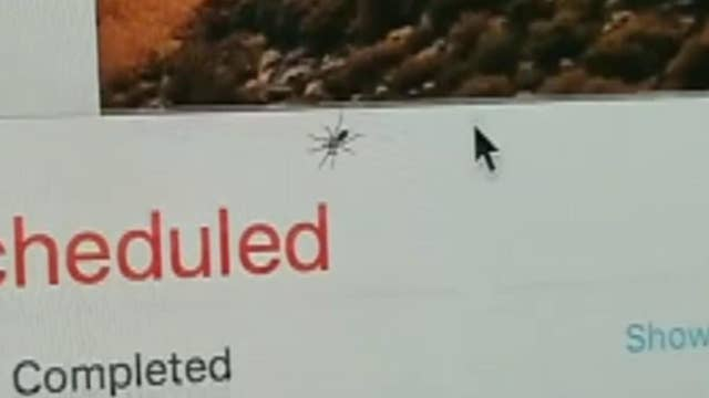 iMac user finds spider living inside of his computer screen