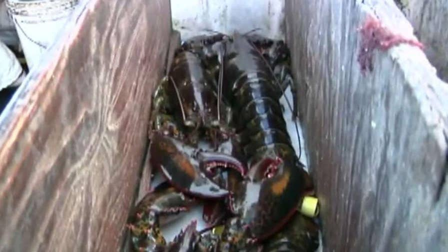 Tariff battle takes a bite out of U.S. lobster profits; Molly Line reports on the fallout.