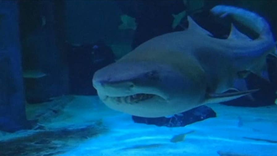 Tips to know on how to prevent a shark attack