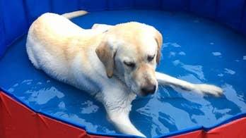 Spike loves a dip in the kiddie pool.