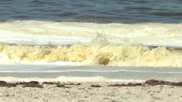 Red tide killing Florida marine animals in record numbers