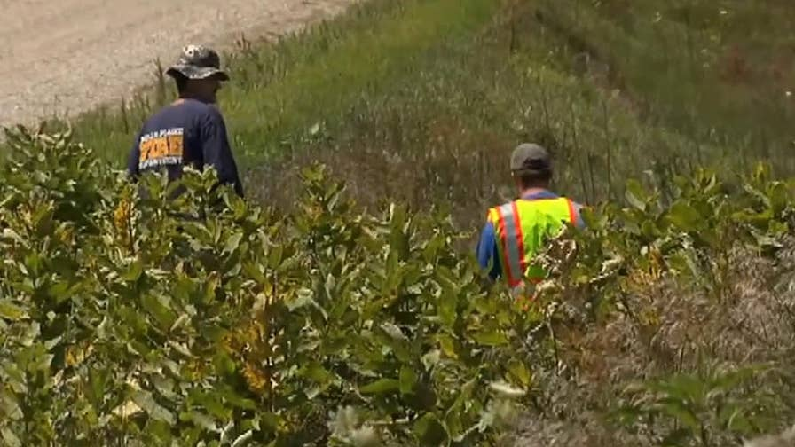 Raw video: Search teams comb through ditches near a pig farm in the search for missing Iowa student Mollie Tibbetts.