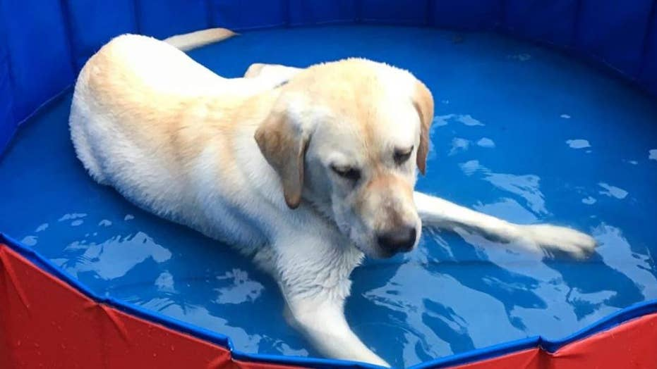 Tips for keeping your pets cool