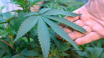 Tax revenue soars from legal recreational marijuana sales; issue still up for debate in several states as the midterm elections approach.