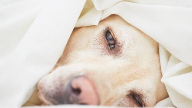 Mysterious dog disease spreading in Virginia