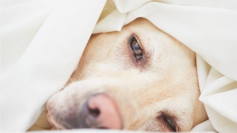Mysterious dog disease hits Virginia city: 'There's an