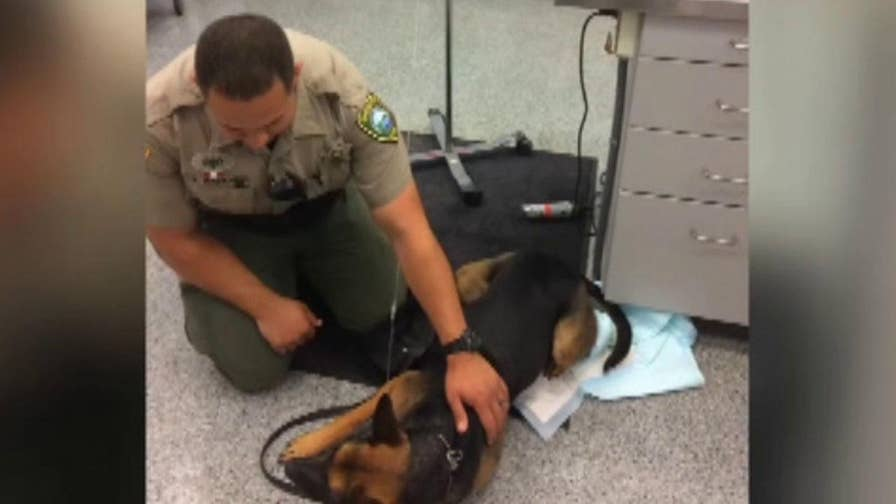 A deputy used a Narcan kit for dogs on a K9 that was exposed to heroin that was smuggled into an Oregon jail.