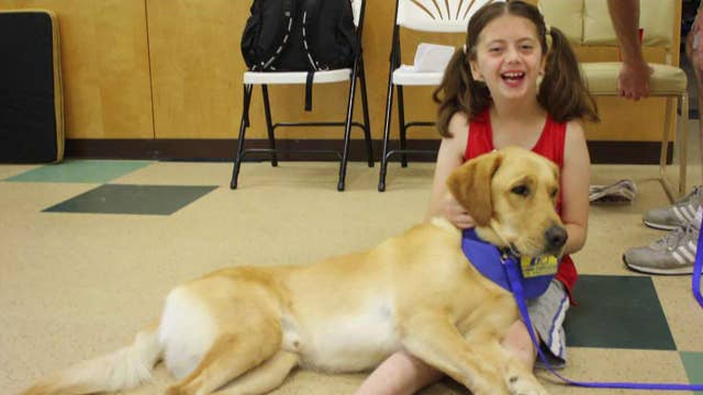 'The Daily Briefing' marks International Assistance Dog Week