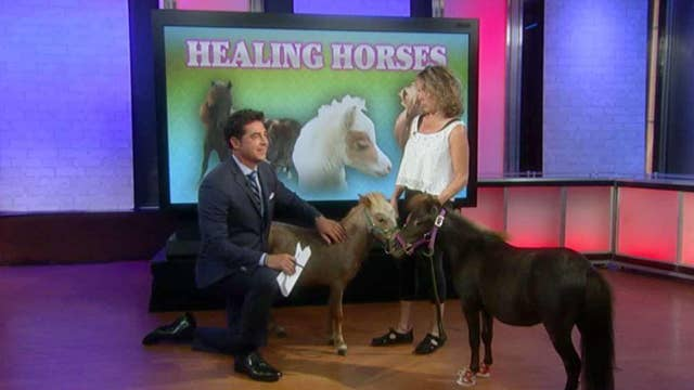 Can mini therapy horses help 'Trump Derangement Syndrome'?