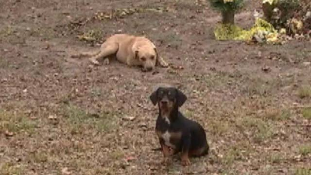 Man's dying wish: new homes for his dogs