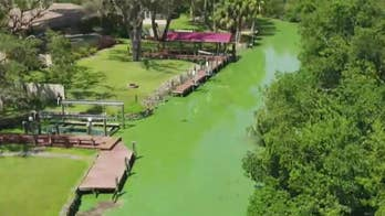 Blue-green algae affecting freshwater lakes as red tide algae threatens marine life; Jeff Flock reports from North Fort Myers.