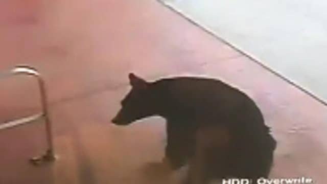 Bear walks into Connecticut liquor store