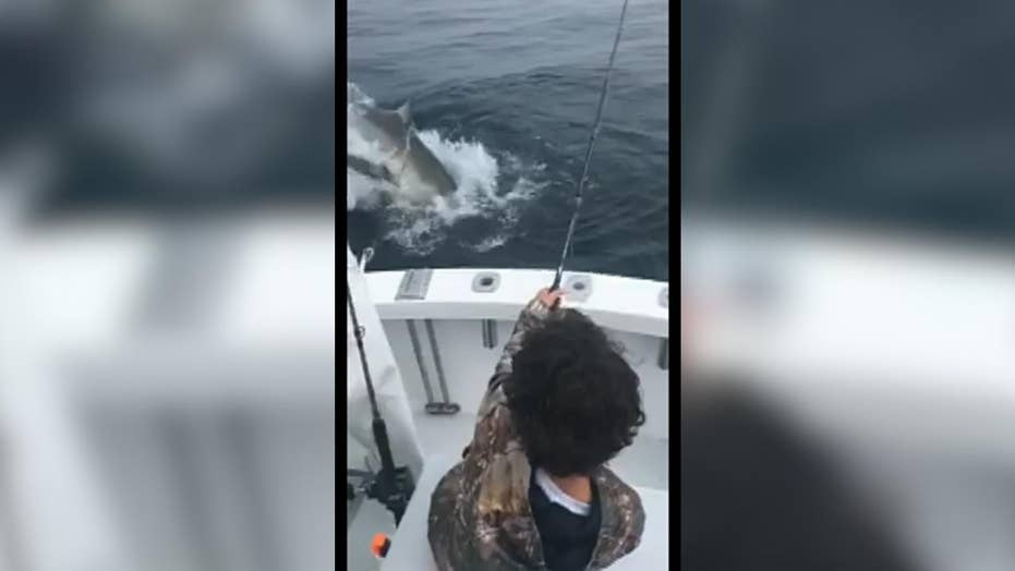Great white shark steals catch off line, surprises kid