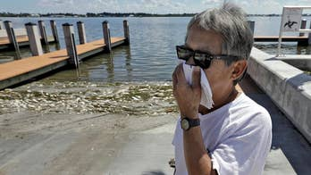 Toxic algae bloom killing marine life, making people sick; Jonathan Serrie reports from Sarasota.