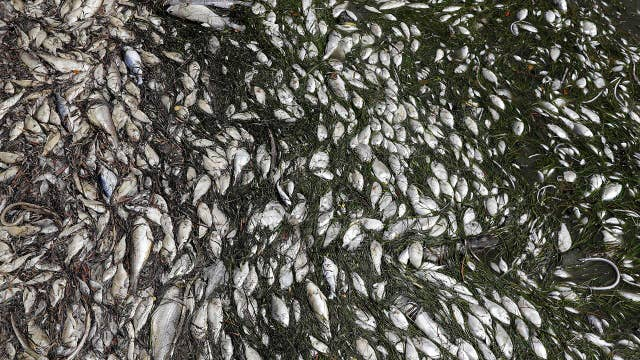 Florida issues red alert over red tide