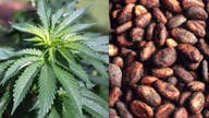 Cannabis-infused coffee: Will it go mainstream?