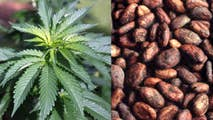 """""""CBD is a chemical from cannabis we should be using,"""" founder of the CBD-based Flower Power Coffee Co. Dr. Craig Leivent tells Fox News. A look at what exactly CBD-infused coffee is and why it could be in a coffee shop near you in the coming months."""