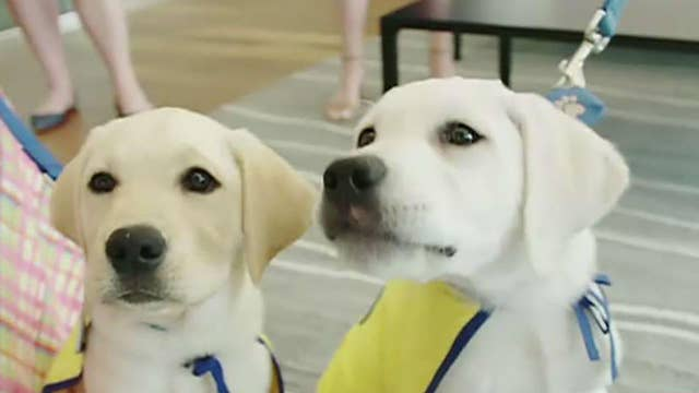 PenFed Credit Union helps employees raise service dogs