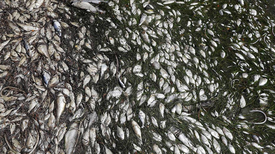 Researchers hope they've found a solution to red tide