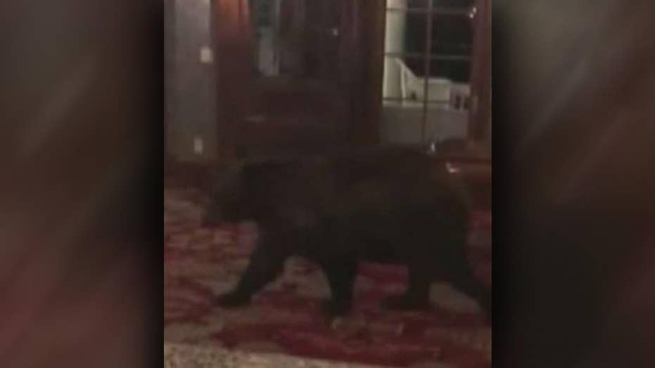 Bear wanders into 'The Shining' hotel in Colorado
