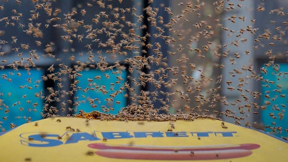 Times Square street shut down after bees swarm hot dog cart