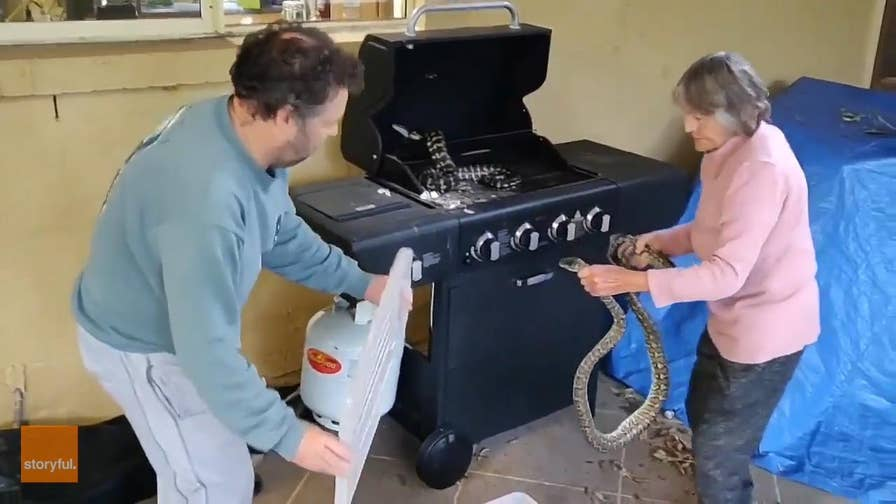 Watch as this Australian grandmother wrestles two pythons from a patio BBQ grill.