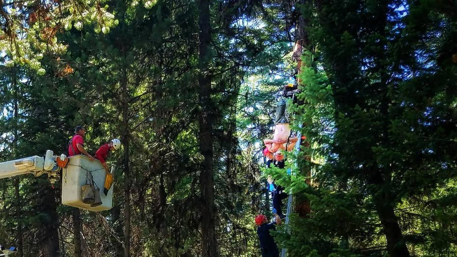 Oregon hunter falls from his tree stand and is left hanging for two days