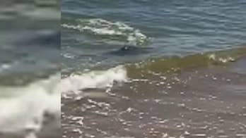 Man visiting North Carolina beach reportedly took a video of what he believed to be a shark swimming through shallow water on Bald Head Island.