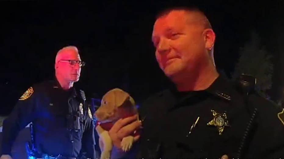 Pit bull puppy emerges from car after police chase