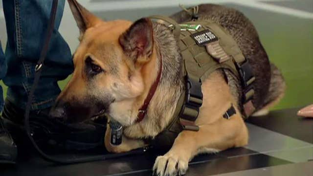 Marine veteran opens up about his gratitude for service dog