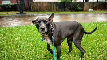 Tropical Storm Barry: Safety tips for pets