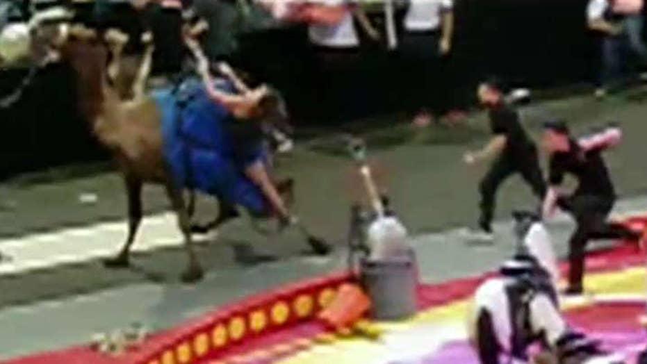 Circus camel bucks child off its back