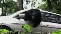 Black bear makes dramatic escape from minivan after North Carolina woman accidentally locked it in.