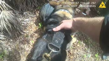 K9 Titan took down a man who tried to kidnap a child in Pasco County, Florida.