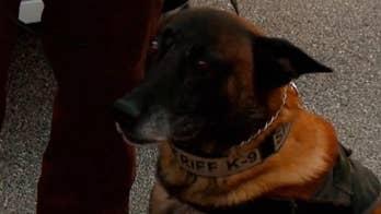 Hendricks County Sheriff's Office welcomes new police dog.