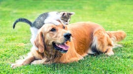 "Heads up, pet owners: The U.S. Food and Drug Administration Thursday warned some flea and tick medications can potentially cause ""neurological adverse events"" in dogs and cats."