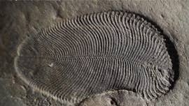 "A previously unclassified creature that lived over 500 million years ago, considered the ""Holy Grail of paleontology,"" has finally been identified, thanks to fossil fat."