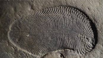 'Holy Grail' fossil mystery cracked  – 558 million-year-old fat reveals earliest known animal