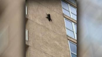 Raw cell phone video captures the daredevil critter as it leaps from the ninth floor.
