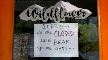 Wildflower Cafe forced to close after bear broke in and caused damage to the restaurant in Evergreen.