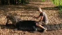Danish tourist slammed by Australian officials for mounting a crocodile after baiting it with a dead wallaby.