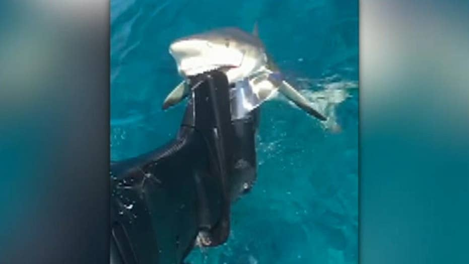 Shark chomps down on fishing boat motor, refuses to let go