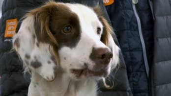 World's first anti-doping dog trained to bring down cheaters