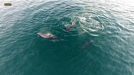 Drone footage shows pod of dolphins 'dancing'