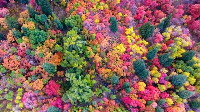 how to pronounce fall foliage