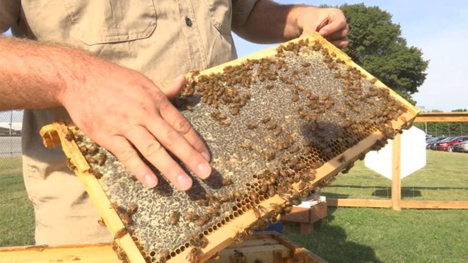 Unusual companies jump into bee biz