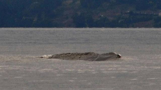 Canada's legendary Ogopogo lake monster caught on video