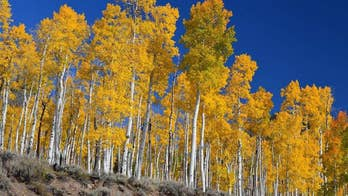 Ancient forest in Utah is dying, scientists warn