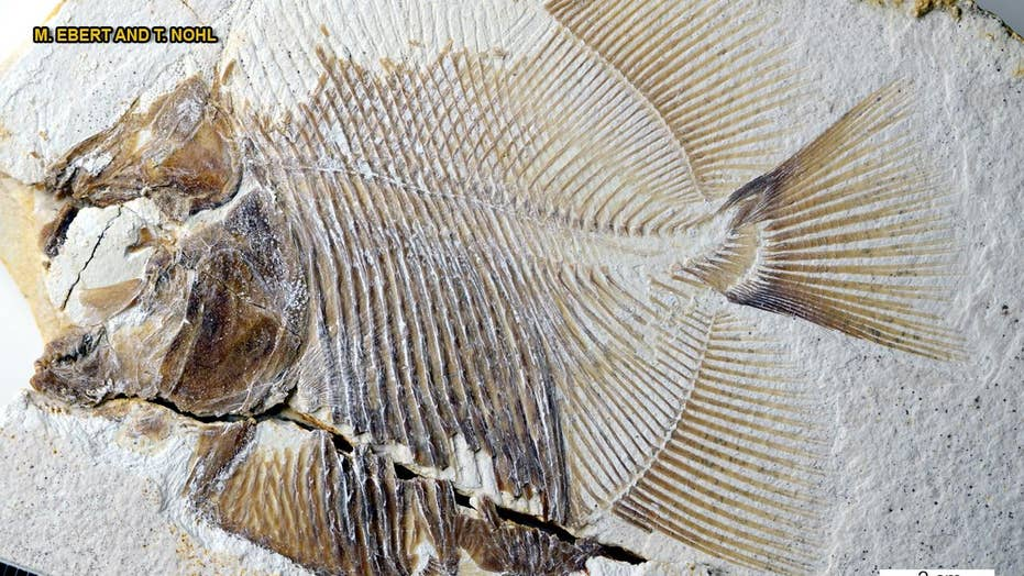 150-million-year-old piranha-like fish discovered