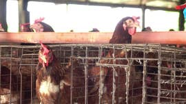 California ballot measure on cage-free rules divides activists, farmers